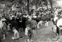 Concurso de ganado vacuno en Andra Mari, 15 de mayo de 1961 (Colección Archivo municipal) (ref. 00610)