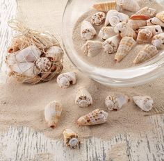 MudPie Bag of Decorative Liswe Conch Sea Shells: Kitchen