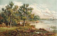 1892 Chromolithograph Euphorbiaceae Trees Eastern