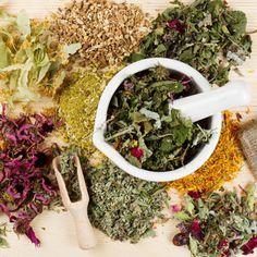 6 Medicinal Herbs to Grow at Home - Echinacea, feverfew, lemon balm, hyssop blue, Yarrow, Lavender bergamont