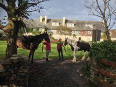 Connemara Equestrian Escapes - Horse Riding Holidays In Ireland Riding Holiday, Ireland Holiday, Connemara, Horse Riding, Horseback Riding, Equestrian, Bring It On, Horses, Holidays