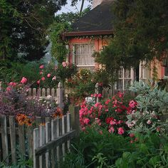 Flower Carpet roses in cottage garden | Early morning in a c… | Flickr