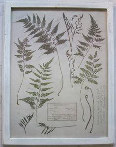 /\ /\ . fern botanical