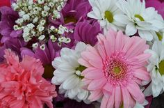"""A lovely, delicate colored bunch of flowers, and a great post on some """"knotty"""" words. Read more."""