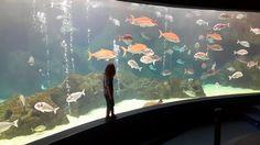 @Cretaquarium .A perfect place for kids all ages.@VisitGreecegr @visitgreececg @DiscoverGRcom @EMSEA_news