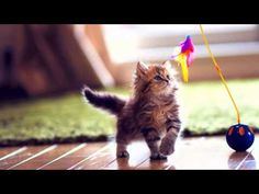 Give your kitty some attractive toys to make active and helps in release of aggression, and also these interactive toys help your kitty to build their muscle tone to look healthy Pretty Cats, Beautiful Cats, Kittens Cutest, Cats And Kittens, Gatos Cat, Kitten Play Collar, Cat Work, Interactive Cat Toys, Owning A Cat