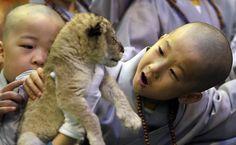 Meninos brincam com filhote de leão no parque de diversões Everland, em Yongin, na Coreia do Sul.