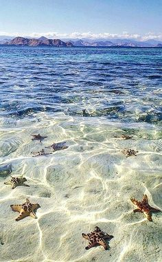 take me to starfish beach in the grand cayman islands! please