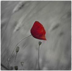 Red. by Miloš