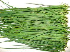 Aprenda a cultivar cebolinha verde corretamente. Com certeza você conhece a cebolinha verde. Ingrediente muito usado em todos os tipos de pratos salgados como omeletes, sopas, purês e carnes, ela oferece inúmeros benefícios a saúde, além de…