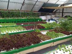 Aquaponic Gardening - LOW WATER