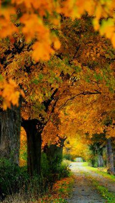 Coming Soon ... Beautiful Autumn