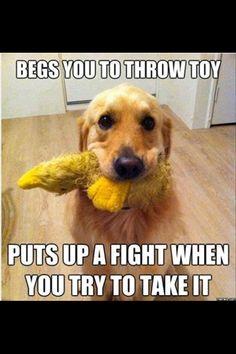 #silly #puppy
