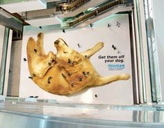 """Frontline: Mall. """"The insight – you may be close to your pet but totally blind to flea infestations. Huge 22 sq.meter stickers, across 3 malls crawling with people were used citywide to highlight their leading product range."""