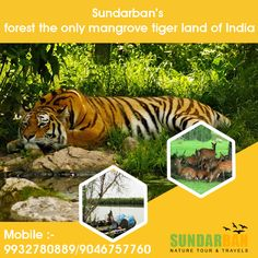 Sundarban Tours # Packages Or Call Us at: 9932780889 https://goo.gl/YW51So