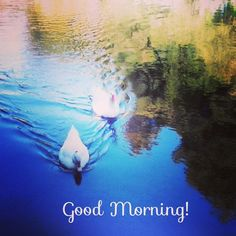 Cua, cua... Es viernes ¡buenos días!  #ideassoneventos #blog #bloglovin #organizacióndeventos #comunicación #protocolo #imagenpersonal #bienestarybelleza #decoración #inspiración #bodas #buenosdías #goodmorning #viernes #friday #happy #happyday #felizdía #patos #cuacua