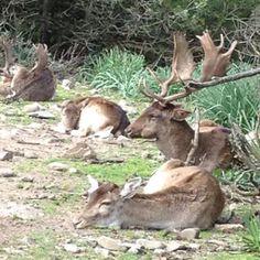 Monte Arcosu WWF reserve