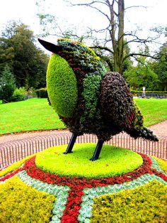 Een gigantische vogel voor in de tuin!!