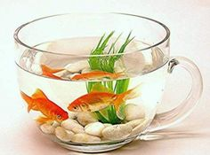 Natural Feng Shui Cures to Attract Harmony, Wealth and Health how to feng shui for wealth with natural feng shui cures, plants, citrus fruits and aquarium tanks with koi fish Glass Fish Bowl, Glass Tea Cups, Glass Jars, Feng Shui Cures, Feng Shui Tips, Aquarium Original, Indoor Water Garden, Water Gardens, Mini Gardens