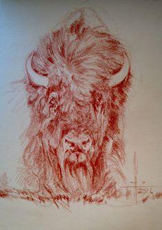 Dibujo bisonte americano a sanguina grasa