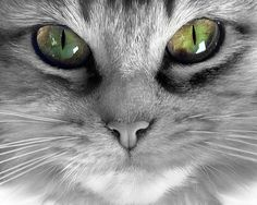 """""""People that hate cats will come back as mice in their next life."""" --Faith Resnick"""