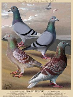 Homing Pigeons by Gary Romig in the style of Fulton