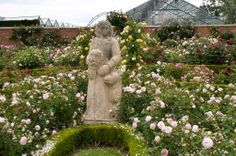 david austin rose gardens | There was also an area for purchasing roses to take home: