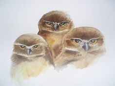 Watercolor on paper Baby Owls, My Works, Watercolor Paintings, Bird, Paper, Animals, Animaux, Watercolor Drawing, Birds