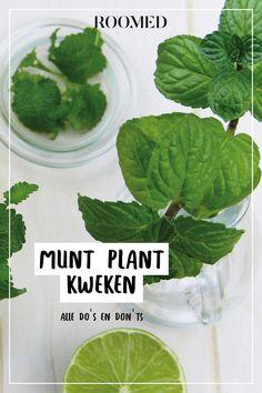 Herb Garden, Garden Plants, Home And Garden, House Plants, Container Gardening, Gardening Tips, Lettuce, Seeds, Vegetables