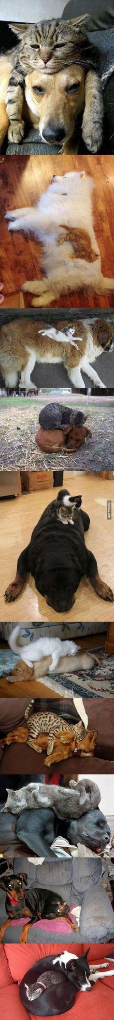 Quién dice que los gatos y los perros no se llevan bien?