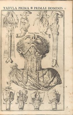 De Vocis Auditusque. Giulio Casserio (ca. 1552-1616 https://pinterest.com/pin/287386019948609536). Enlarge: https://pinterest.com/pin/287386019947538009