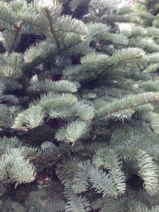 Tips for keeping your landscaping healthy during these cold Winter days and frosty nights!
