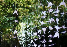 Dandelion, Traditional, Weddings, Plants, Dandelions, Wedding, Plant, Taraxacum Officinale, Marriage