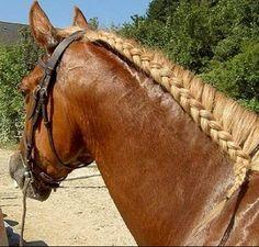 Horse Mane Braids, Horse Hair Braiding, Horse Barns, Horses, Tail Braids, Horse Tail, Mane N Tail, Trail Riding, Plait