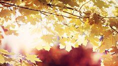 10 Beautiful Autumn Wallpapers - UltraLinx