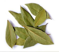 Bayleafs from the North of Portugal