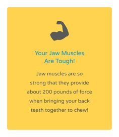 Do you know how strong your jaw muscles are? Dr. Beanca Chu Pediatric Dentistry | Catch the wave to great smiles! | (714) 962-9302 | info@byebyesugarbugs.com | byebyesugarbugs.com