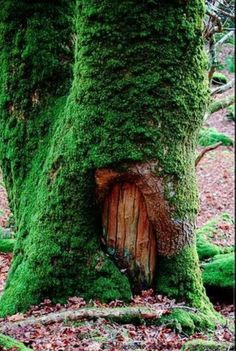 Photos Voyages, Fairy Doors, Fairy Land, Fairy Houses, Dog Houses, Faeries, Beautiful Places, Scenery, Around The Worlds