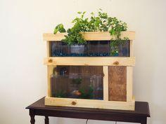 Indoor Gardening Kits. Aquaponics