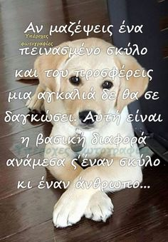 Kindness To Animals, Greek Quotes, Dog Love, Animals And Pets, Teddy Bear, Puppies, Humor, Cats, Animal Pictures