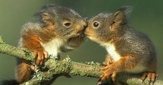 Squirrel, Kiss and Photos on Pinterest