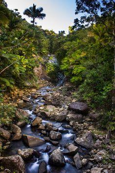 """""""El Yunque"""" by Leniel Velazquez.....The Rainforest,  Puerto Rico"""