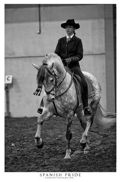 Striking image of a horse and and rider.