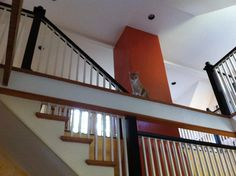 Cats who makes themselves part of the architecture.