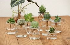 25 DIY Test Tube Vase Crafts IdeasThe post 25 DIY Test Tube Vase Crafts Ideas & Page 4 of 25 & LoveIn Home appeared first on Dekoration. Succulent Gardening, Hydroponic Gardening, Planting Succulents, Garden Plants, Planting Flowers, Plants Grown In Water, Water Plants Indoor, Decoration Plante, Vase Crafts