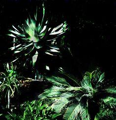 Palms - Photo: Beata Bauer