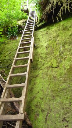 one of the ladders on the West Coast Trail - going to have to work on that fear of heights!