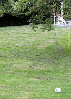 How to: (not) mow a lawn - Inspire Me Heather