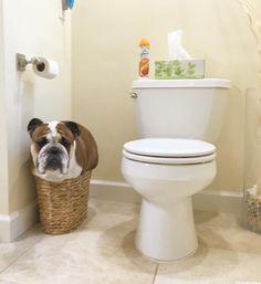 worldofbulldog: just because