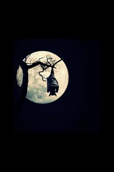 Bat and full moon